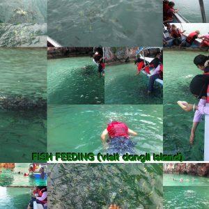 dangli-island-fish-feeding