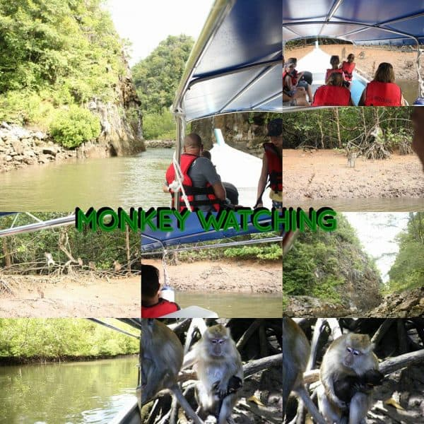 monkey-watching